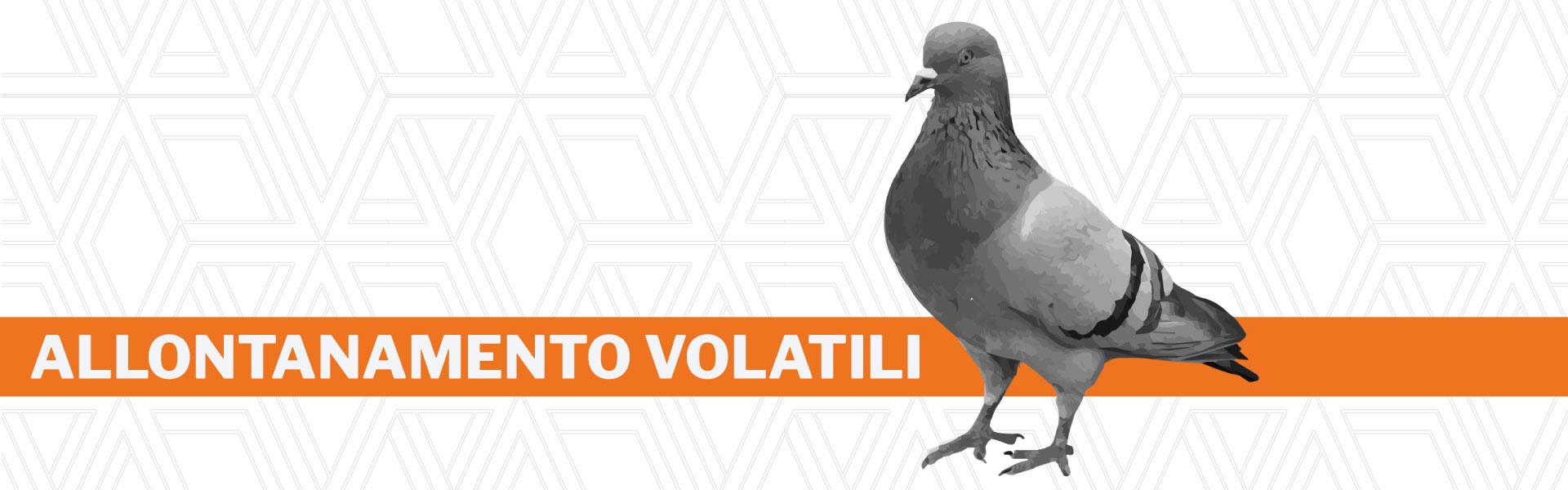Allontanamento piccioni e volatili Urania srl