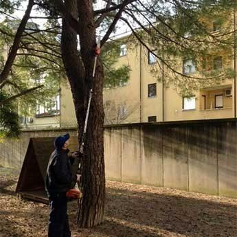 potatura alberi urania srl