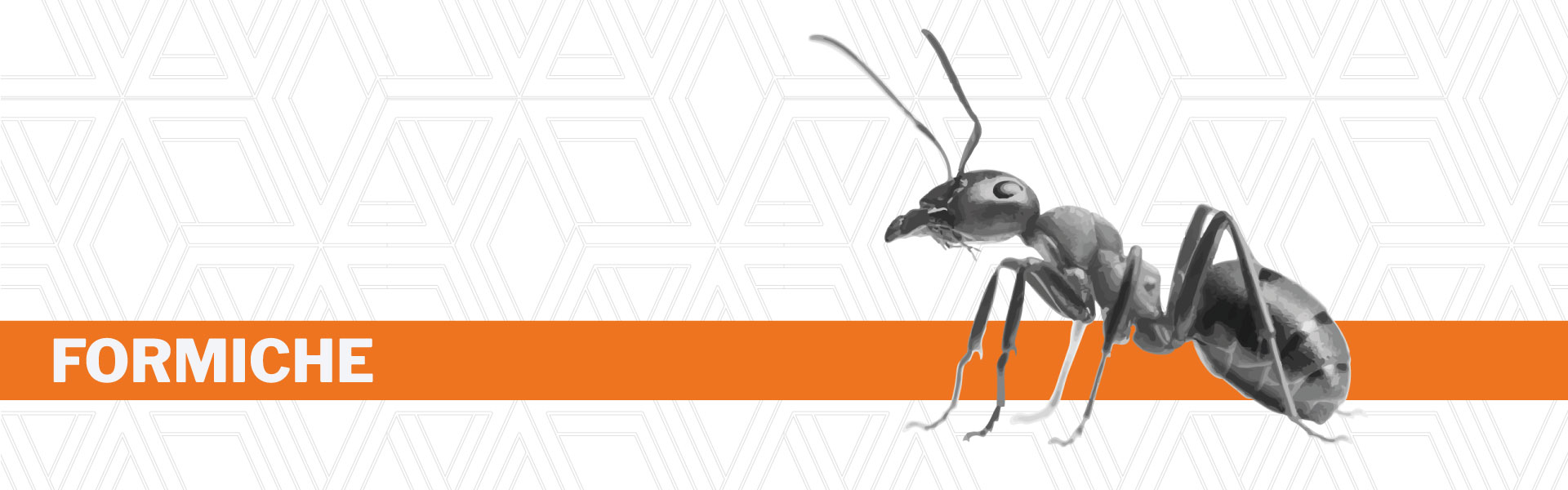 Disinfestazione formiche Urania srl