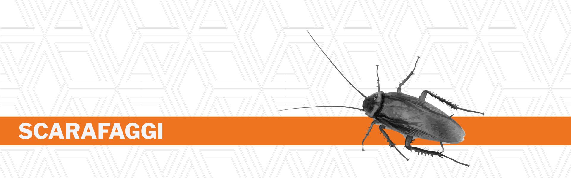 Disinfestazione scarafaggi Urania srl