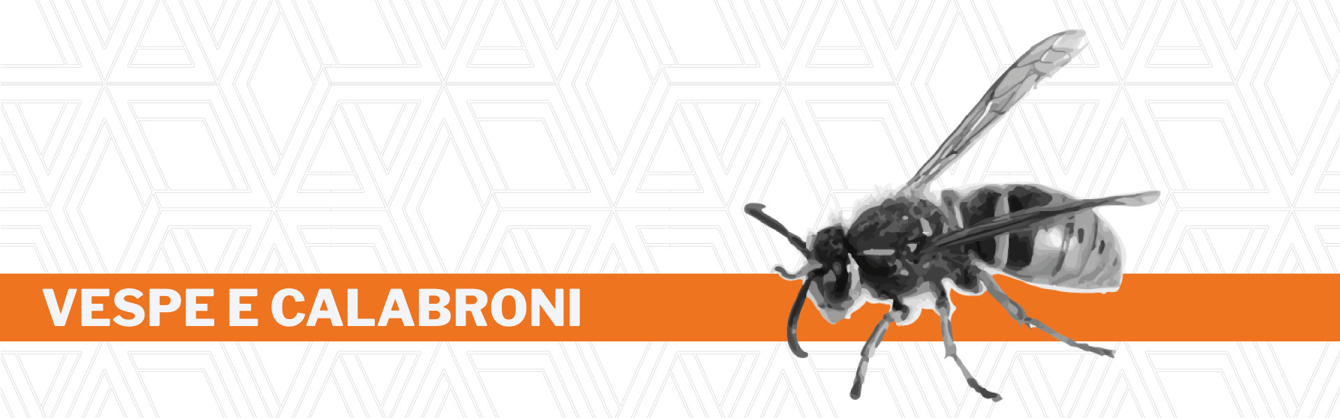 Disinfestazione vespe e calabroni Urania srl